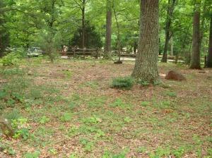 Slave Graveyard at Monticello, 2004